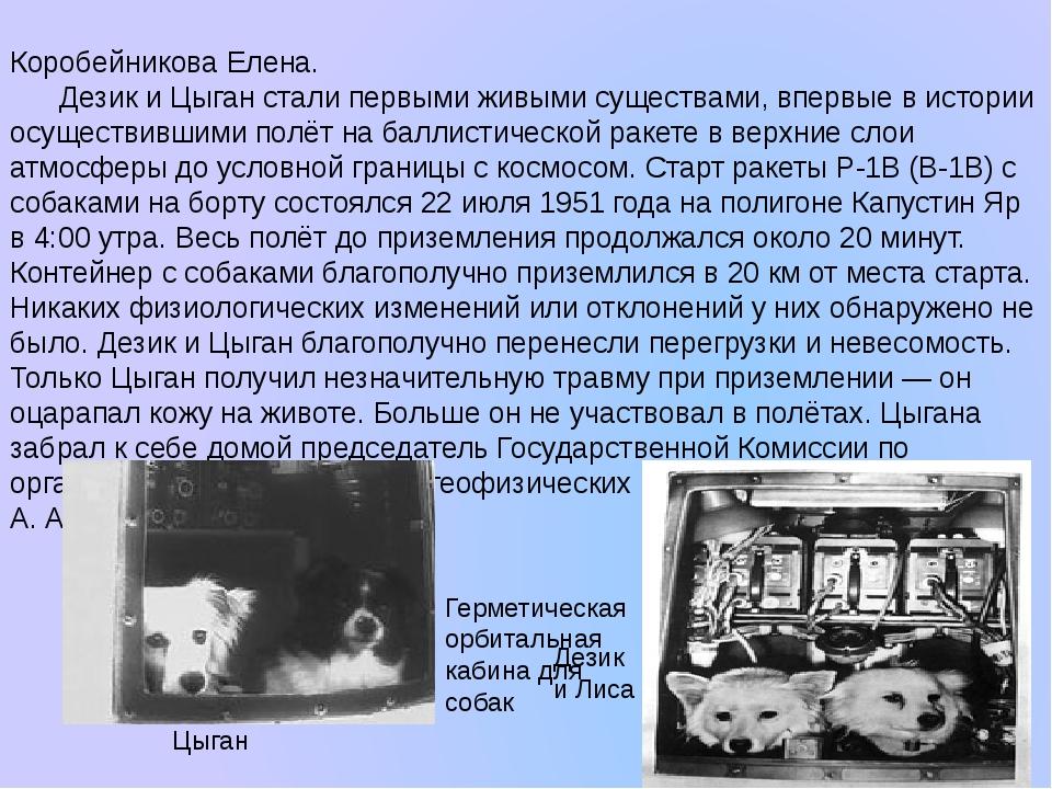 Коробейникова Елена. Дезик и Цыган стали первыми живыми существами, впервые в...