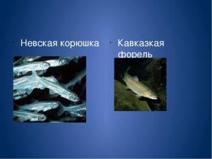 Невская корюшка Кавказкая форель