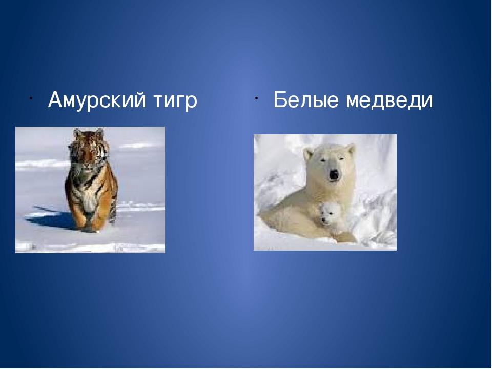 Амурский тигр Белые медведи