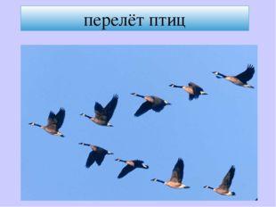 перелёт птиц