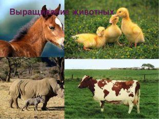 Выращивание животных