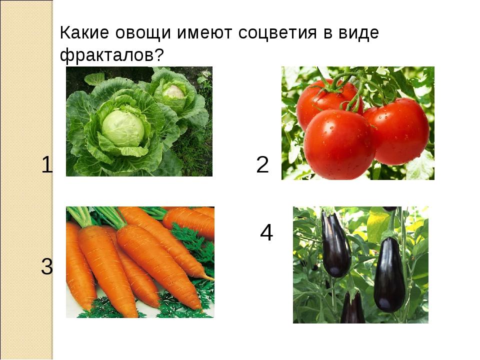 Какие овощи имеют соцветия в виде фракталов? 1 3 2 4