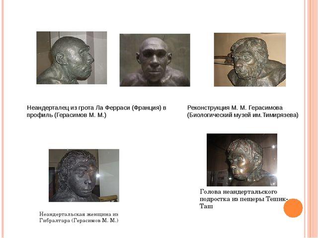 Неандерталец из гротаЛа Ферраси(Франция) в профиль (Герасимов М. М.) Неанде...