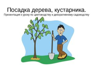 Посадка дерева, кустарника. Презентация к уроку по цветоводству и декоративно