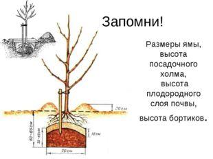 Размеры ямы, высота посадочного холма, высота плодородного слоя почвы, высота