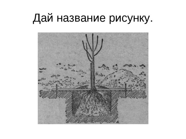 Дай название рисунку.