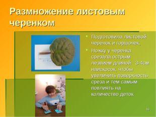 Размножение листовым черенком Подготовила листовой черенок и горшочек, Ножку