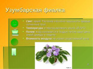 Узумбарская фиалка Свет: яркий. Растение способно переносить прямые солнечные
