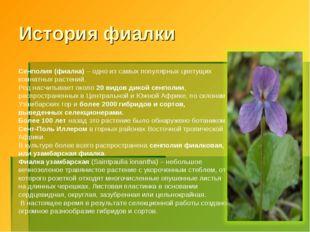 * История фиалки Сенполия (фиалка) – одно из самых популярных цветущих комнат