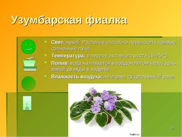 Узумбарская фиалка Свет: яркий. Растение способно переносить прямые солнечные...