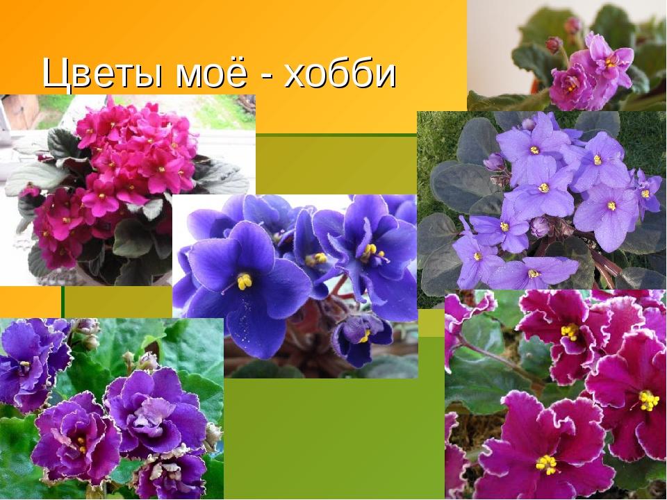 * Цветы моё - хобби