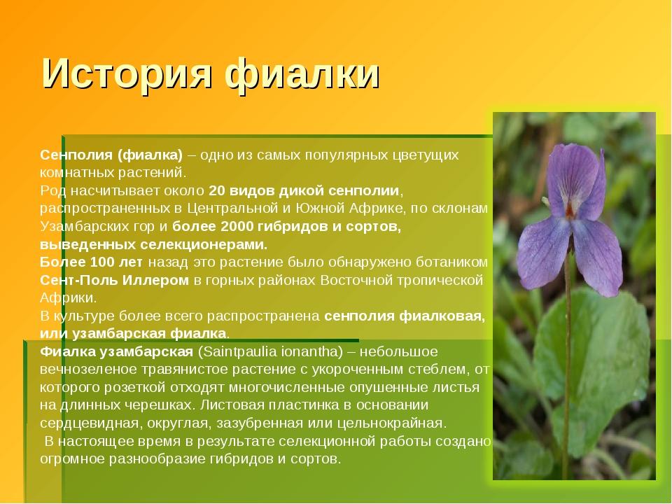 * История фиалки Сенполия (фиалка) – одно из самых популярных цветущих комнат...