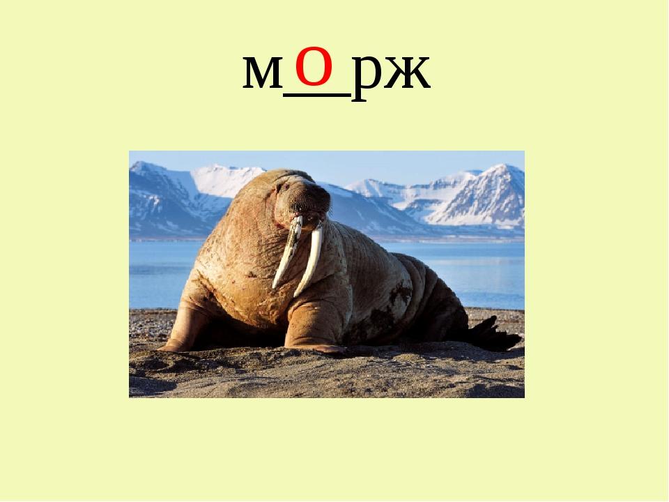 м__рж о