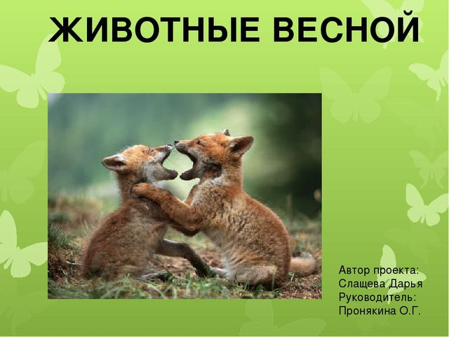 ЖИВОТНЫЕ ВЕСНОЙ Автор проекта: Слащева Дарья Руководитель: Пронякина О.Г.