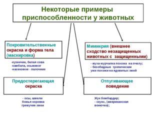 Некоторые примеры приспособленности у животных Покровительственные окраска и