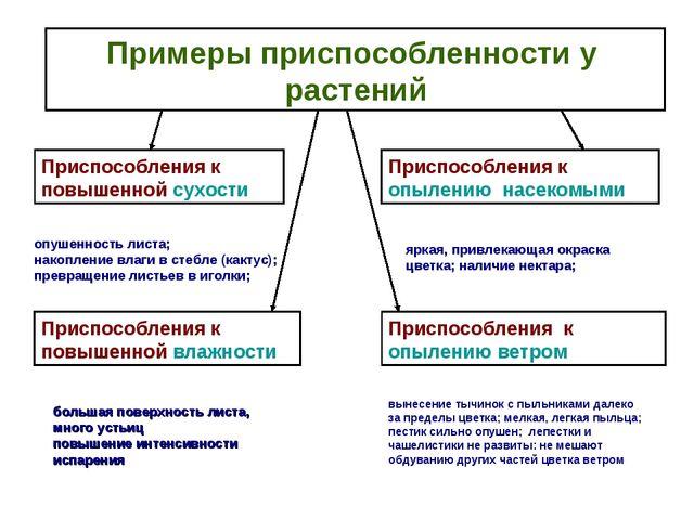 Примеры приспособленности у растений Приспособления к повышенной сухости