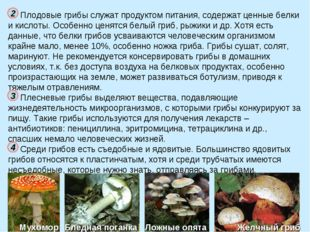 Плодовые грибы служат продуктом питания, содержат ценные белки и кислоты. Осо