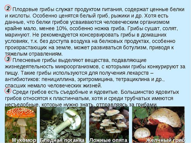 Плодовые грибы служат продуктом питания, содержат ценные белки и кислоты. Осо...