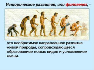 Историческое развитие, или филогенез, - это необратимое направленное развитие