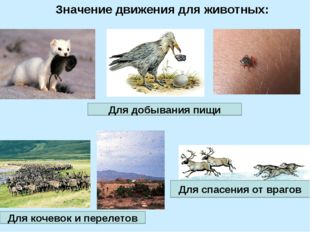 Значение движения для животных: Для добывания пищи Для кочевок и перелетов Дл