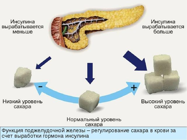 Функция поджелудочной железы – регулирование сахара в крови за счет выработки...