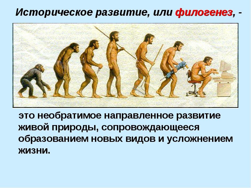 Историческое развитие, или филогенез, - это необратимое направленное развитие...