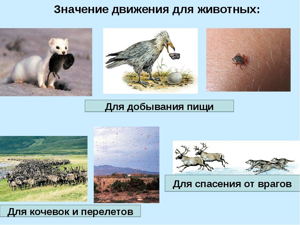 Значение движения для животных: Для добывания пищи Для кочевок и перелетов Дл...