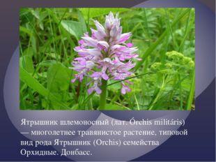 Ятрышник шлемоносный (лат. Órchis militáris) — многолетнее травянистое растен
