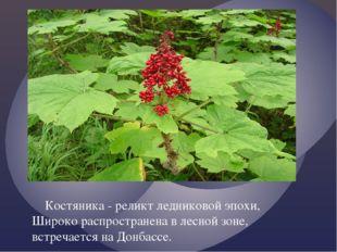 Костяника - реликт ледниковой эпохи, Широко распространена в лесной зоне, вс