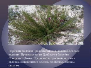 Норичник меловой - реликтовый вид, донецко-донской эндемик. Произрастает на Д