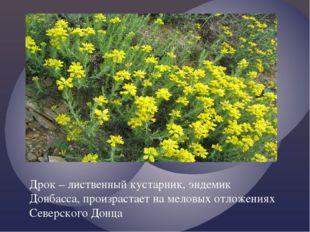 Дрок – лиственный кустарник, эндемик Донбасса, произрастает на меловых отложе