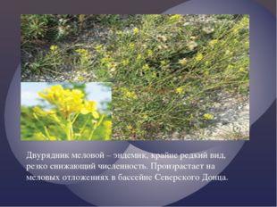 Двурядник меловой – эндемик, крайне редкий вид, резко снижающий численность.