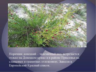 Норичник донецкий – эндемичный вид, встречается только на Донецком кряже и в