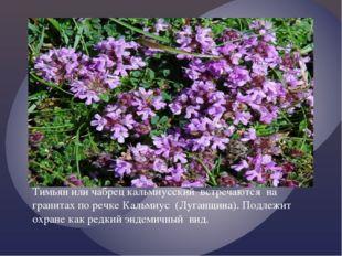 Тимьян или чабрец кальмиусский встречаются на гранитах по речке Кальмиус (Луг