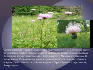 Серпуха донская – редкий эндемичный вид бассейна Дона. В Донбассе растет по