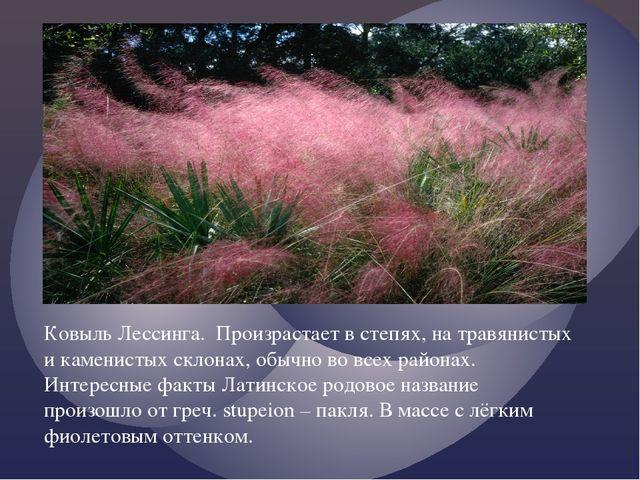 Ковыль Лессинга. Произрастает в степях, на травянистых и каменистых склонах,...