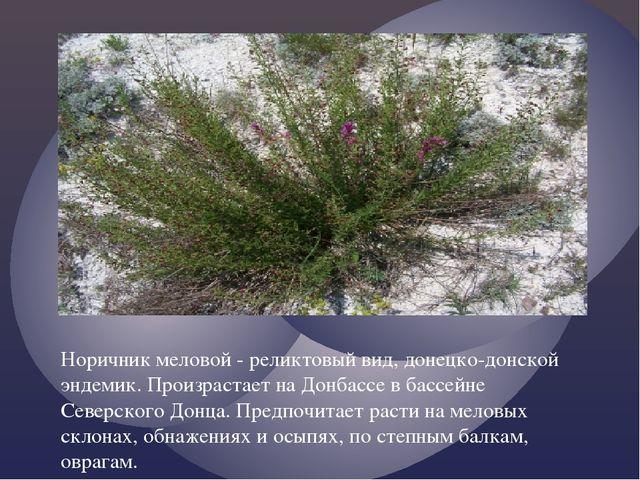 Норичник меловой - реликтовый вид, донецко-донской эндемик. Произрастает на Д...