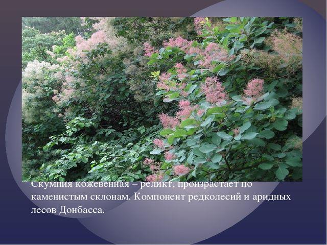 Скумпия кожевенная – реликт, произрастает по каменистым склонам. Компонент ре...