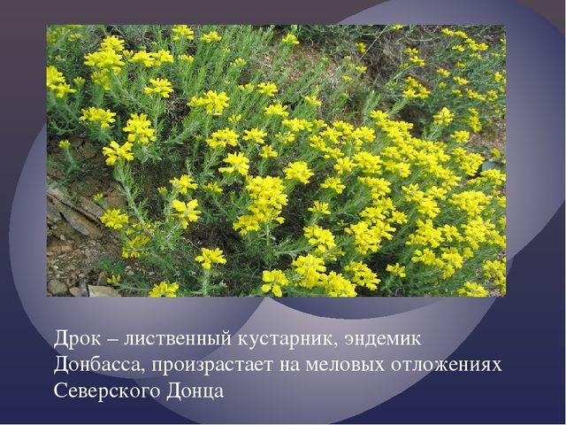Дрок – лиственный кустарник, эндемик Донбасса, произрастает на меловых отложе...
