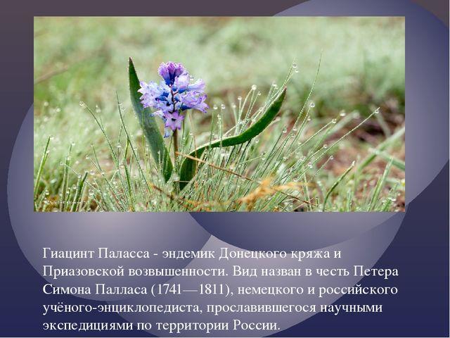 Гиацинт Паласса - эндемик Донецкого кряжа и Приазовской возвышенности. Вид на...
