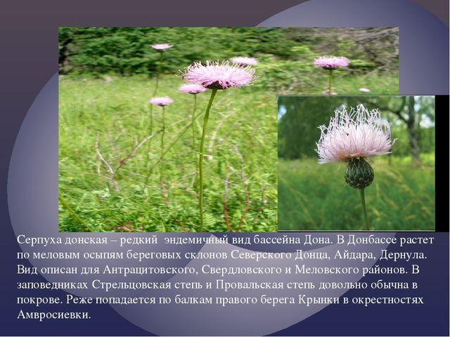 Серпуха донская – редкий эндемичный вид бассейна Дона. В Донбассе растет по...
