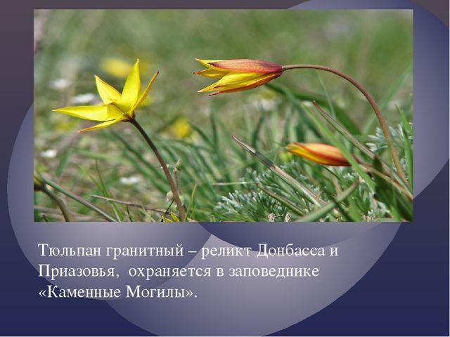 Тюльпан гранитный – реликт Донбасса и Приазовья, охраняется в заповеднике «Ка...