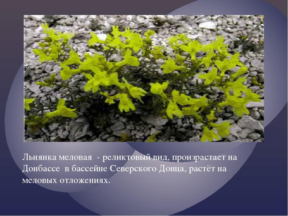 Льнянка меловая - реликтовый вид, произрастает на Донбассе в бассейне Северск...