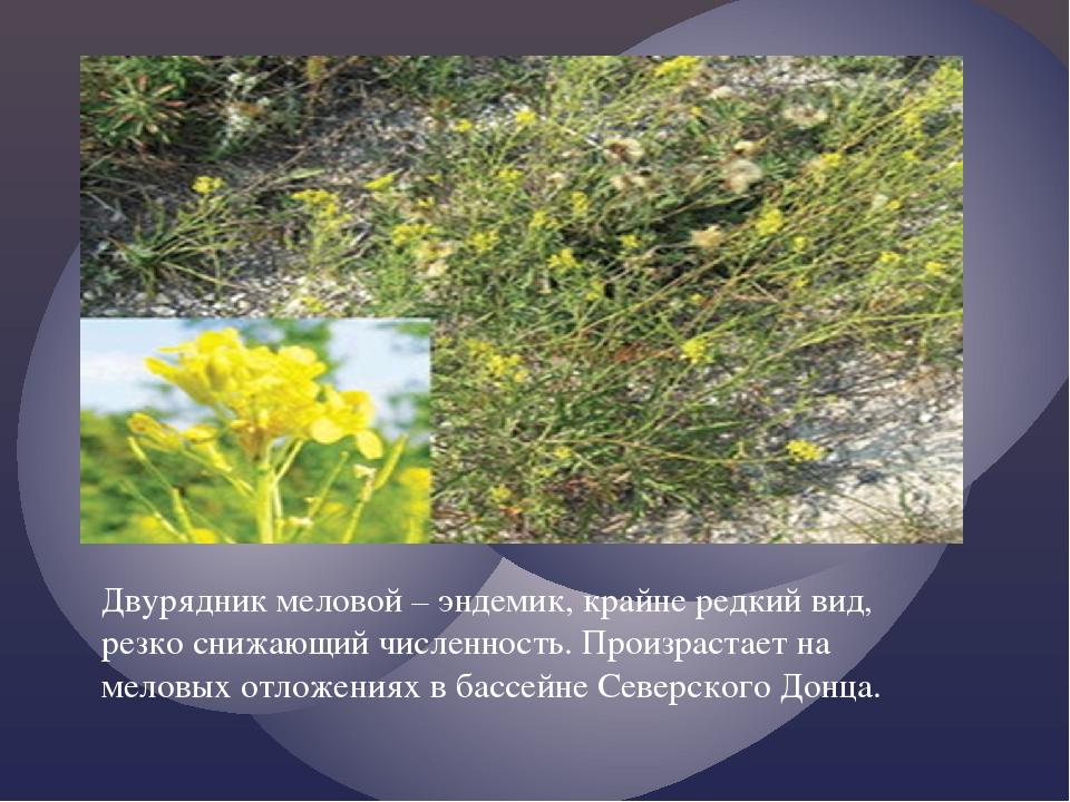Двурядник меловой – эндемик, крайне редкий вид, резко снижающий численность....