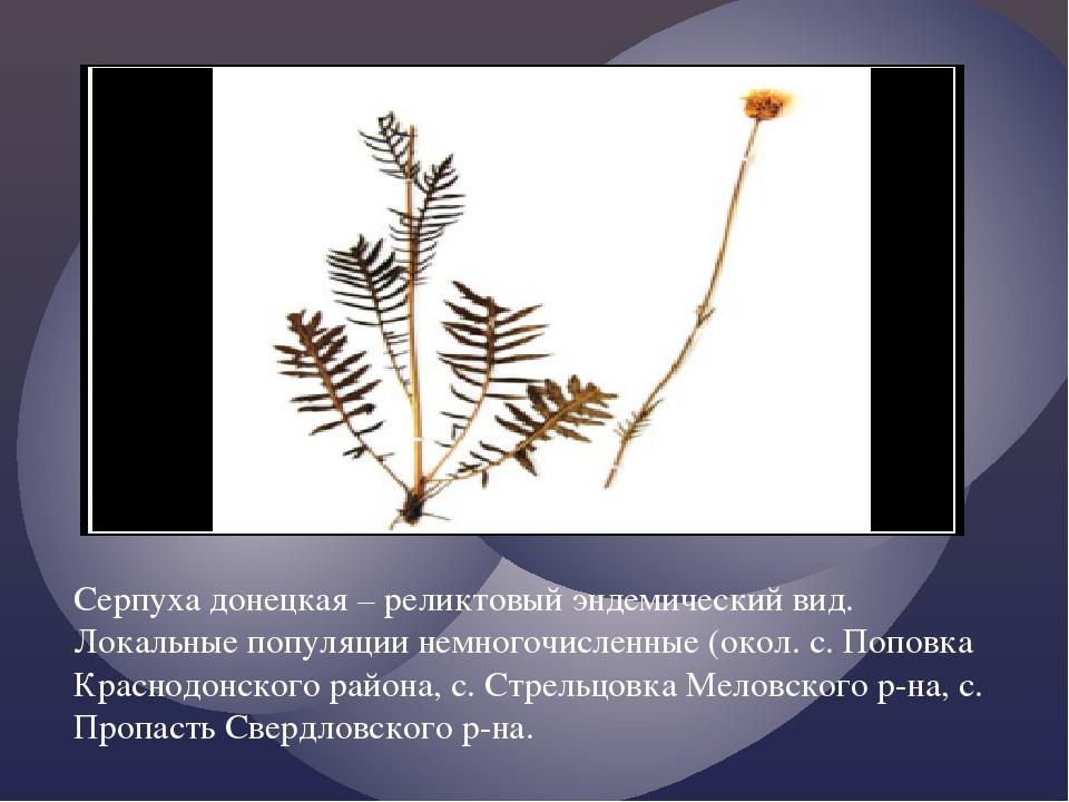 Серпуха донецкая – реликтовый эндемический вид. Локальные популяции немногоч...