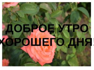 ДОБРОЕ УТРО ХОРОШЕГО ДНЯ!