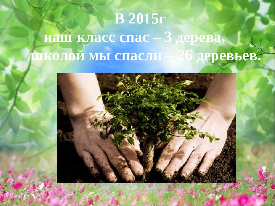 В 2015г наш класс спас – 3 дерева, школой мы спасли – 26 деревьев.
