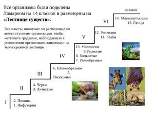 2. Полипы 1. Инфузории I 4. Черви 3. Лучистые 6. Паукообразные 5. Насекомые