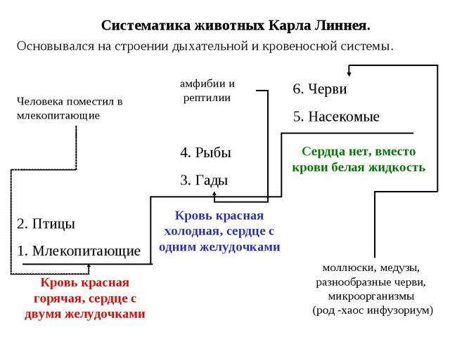 Систематика животных Карла Линнея. Основывался на строении дыхательной и кров...