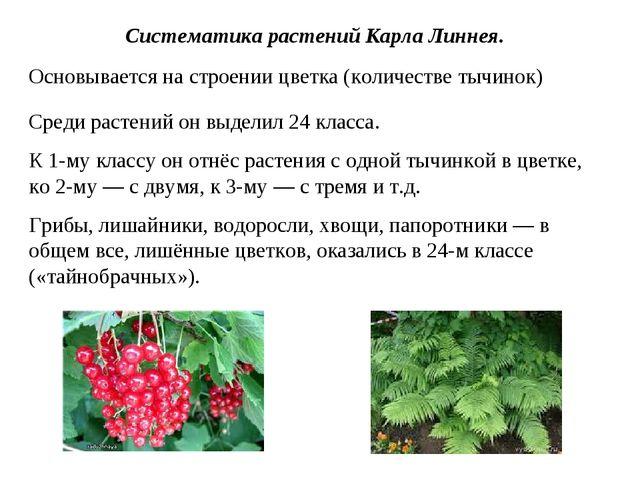 Систематика растений Карла Линнея. Среди растений он выделил 24 класса. К 1-м...